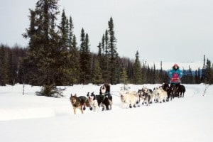 Oneupweb CEO Lisa Wehr dog sleding