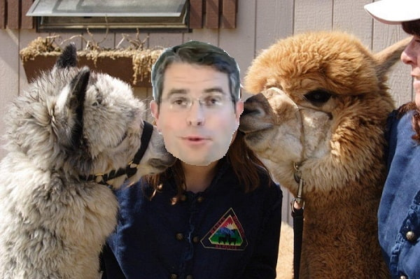 alpacas-kiss-matt cutts