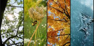 Collage of different seasonal photos
