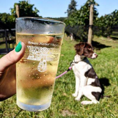 hand holding a pint of cider with dog in background at winery