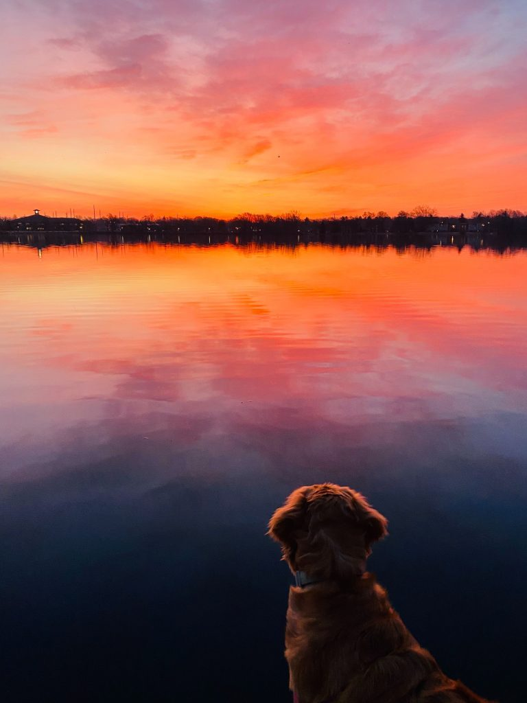 Dog looks across smooth lake at sunset