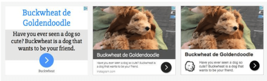 Display ad for Buckwheat de Goldendoodle